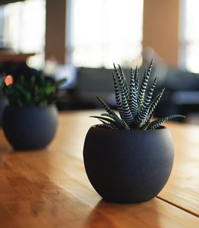zimmerpflanze_klein